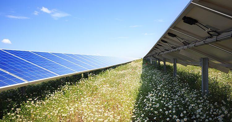 Der grüne Daumen von Solaranlagen