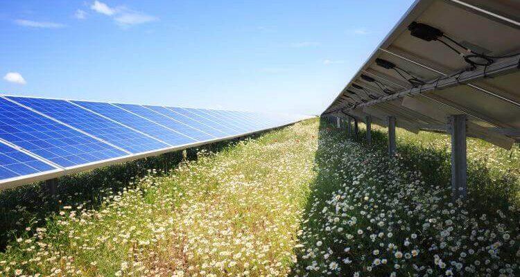 Neue Studie zeigt: Solarparks sind ein Gewinn für die Biodiversität