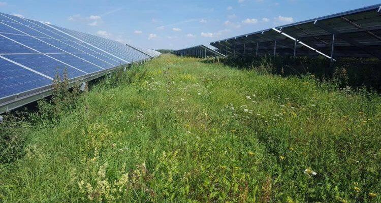 Gute Planung von Photovoltaik-Freilandanlagen: Klimaschutzund Naturschutz vereinen